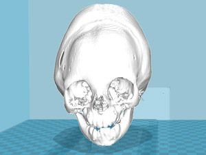3D model of a skull before printing